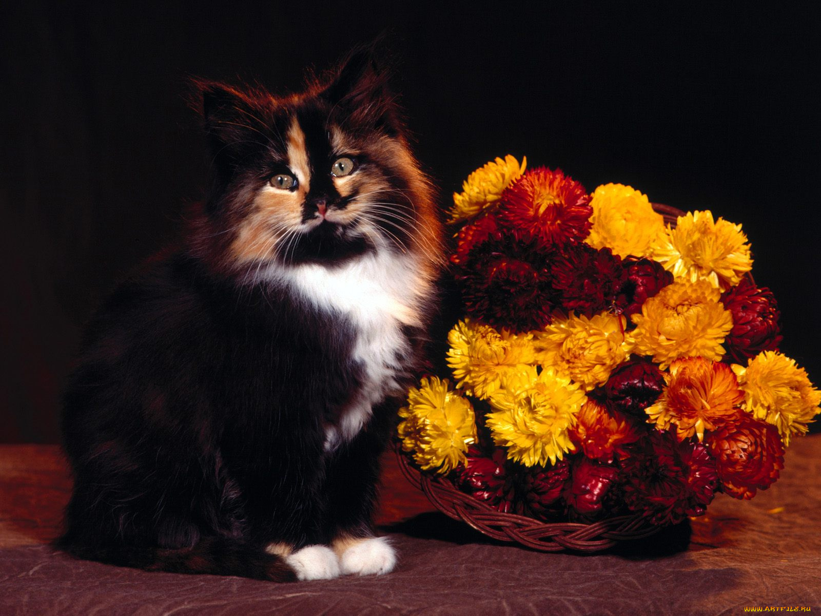 Кот с букетом открытка, мой день картинки