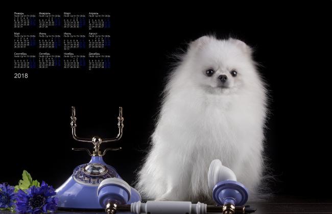 Картинки На Рабочий Стол Телефона Собаки