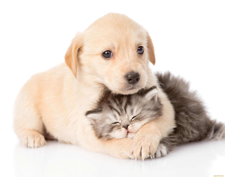 Ватсапе отправить, картинки с котятами и щенками милые