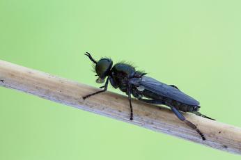 Картинка животные насекомые макро фон зелёный насекомое cristian arghius