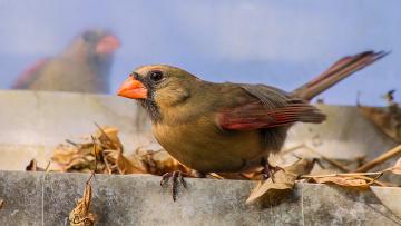 Картинка животные птицы птичка