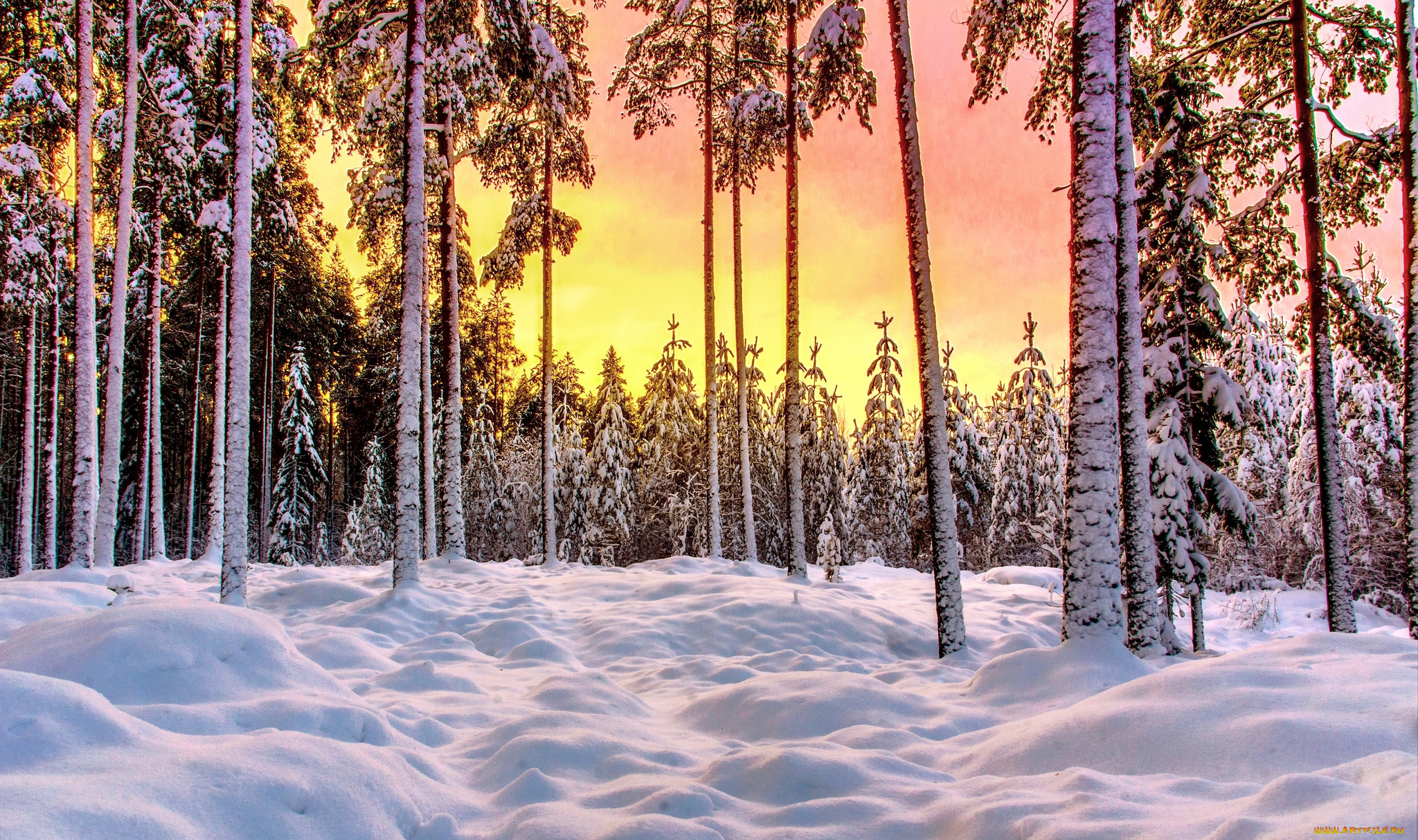 Обои На Стол Зимний Лес