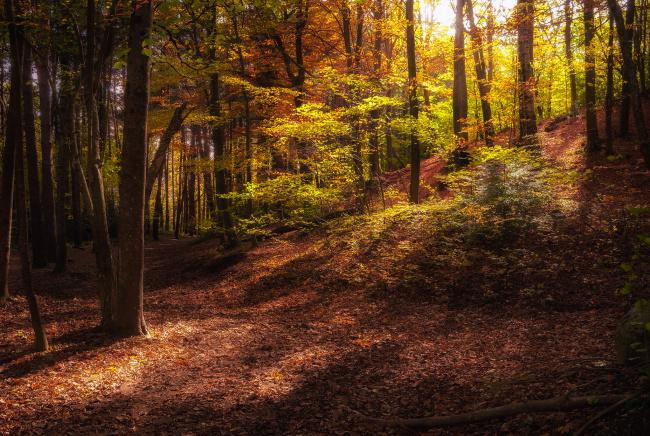 Обои картинки фото природа, лес, деревья