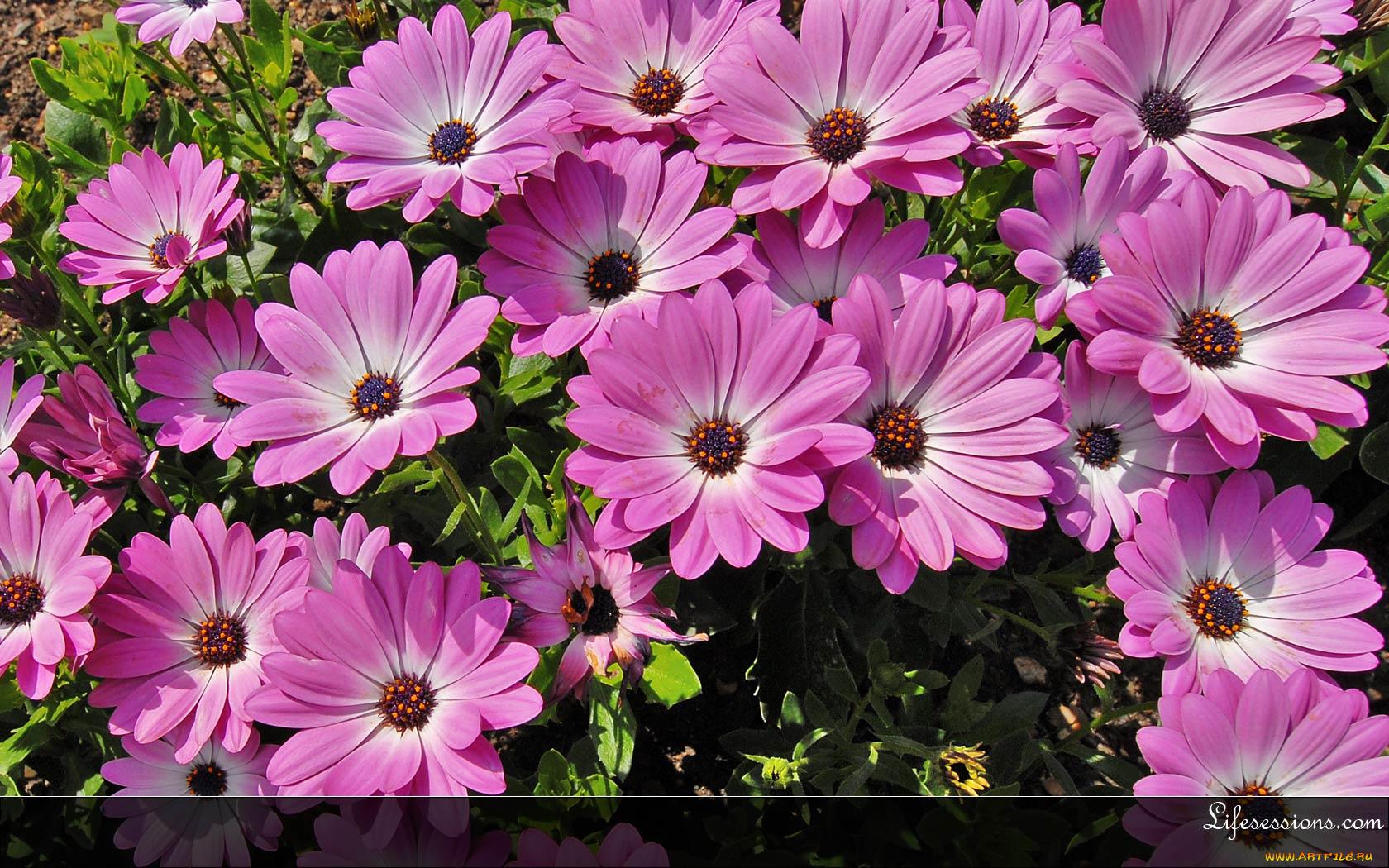 Фото из цветов в виде животных