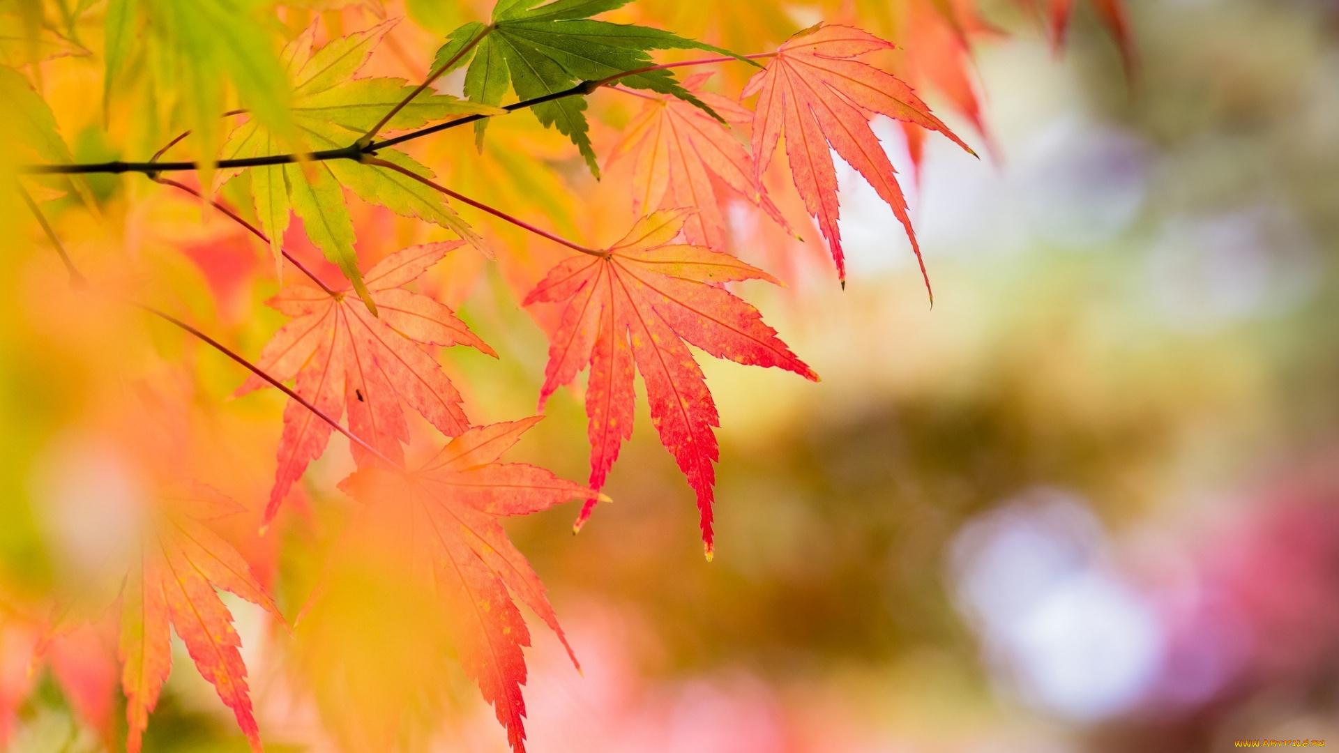 природа лист осень  № 543266 загрузить