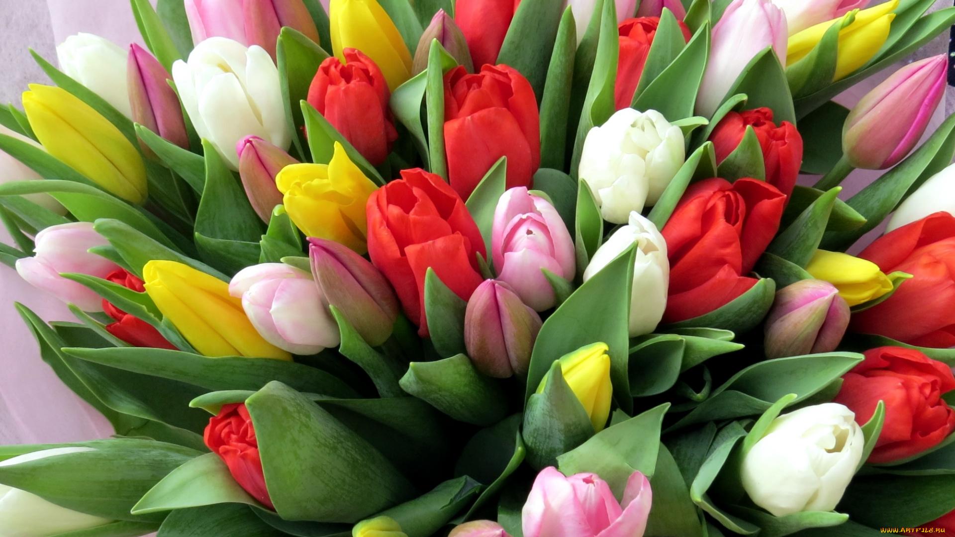 Днем, красивые открытки розы и тюльпаны