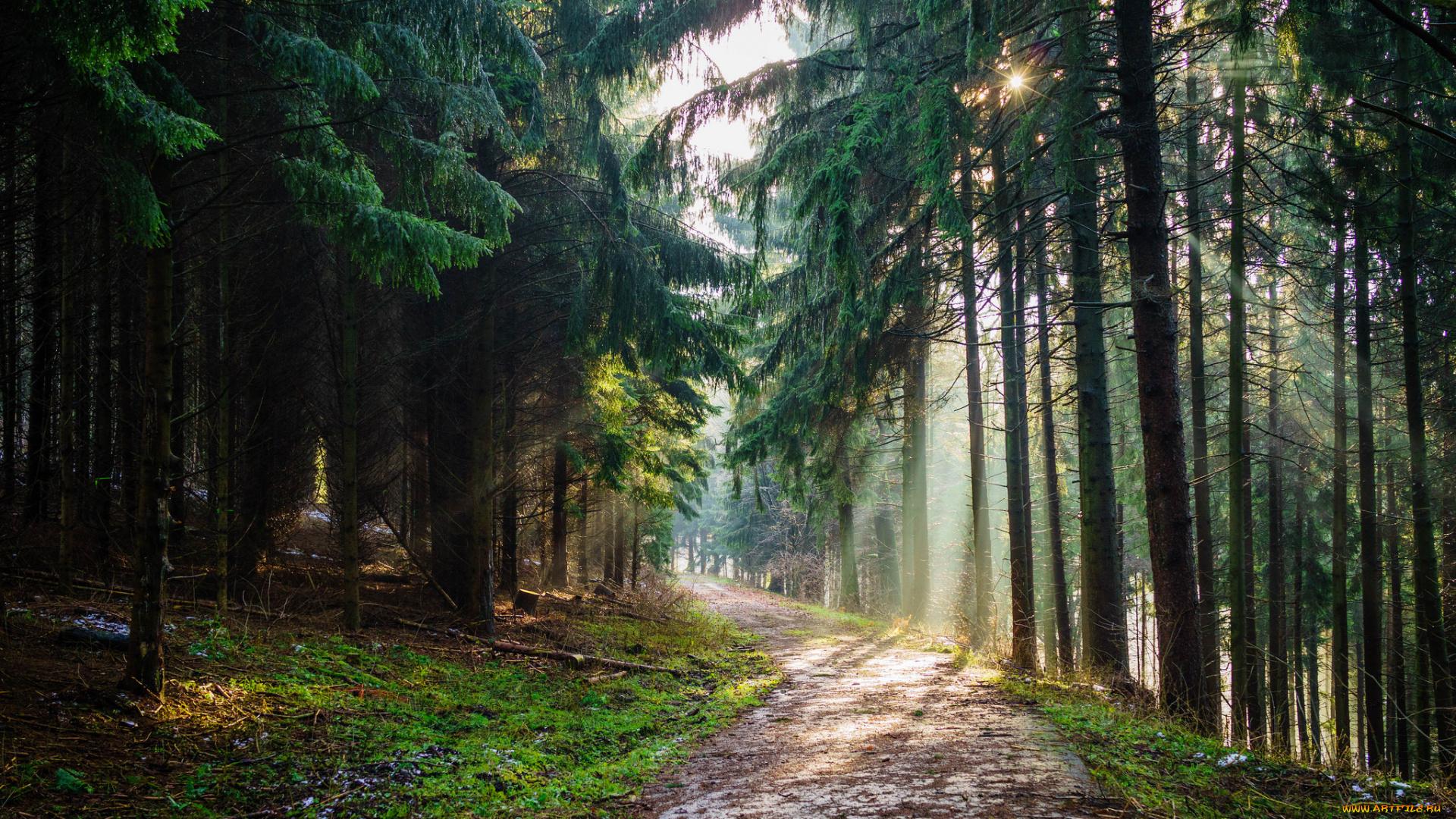 На лесной тропе картинки