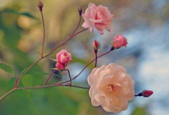 обоя разное, компьютерный дизайн, розы