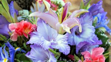 обоя цветы, разные вместе, гладиолусы, ирисы, лилии
