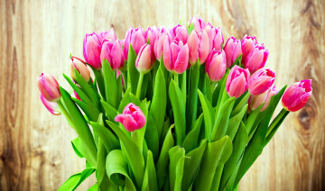 обоя цветы, тюльпаны, бутоны