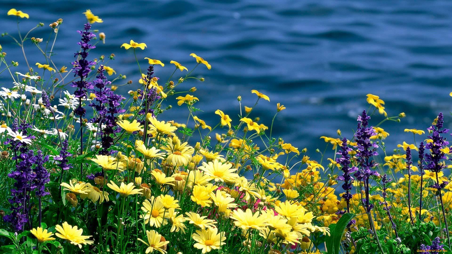 Лет свадьбы, картинки на рабочий стол полевые цветы самые красивые