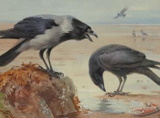 Картинка рисованные archibald thorburn