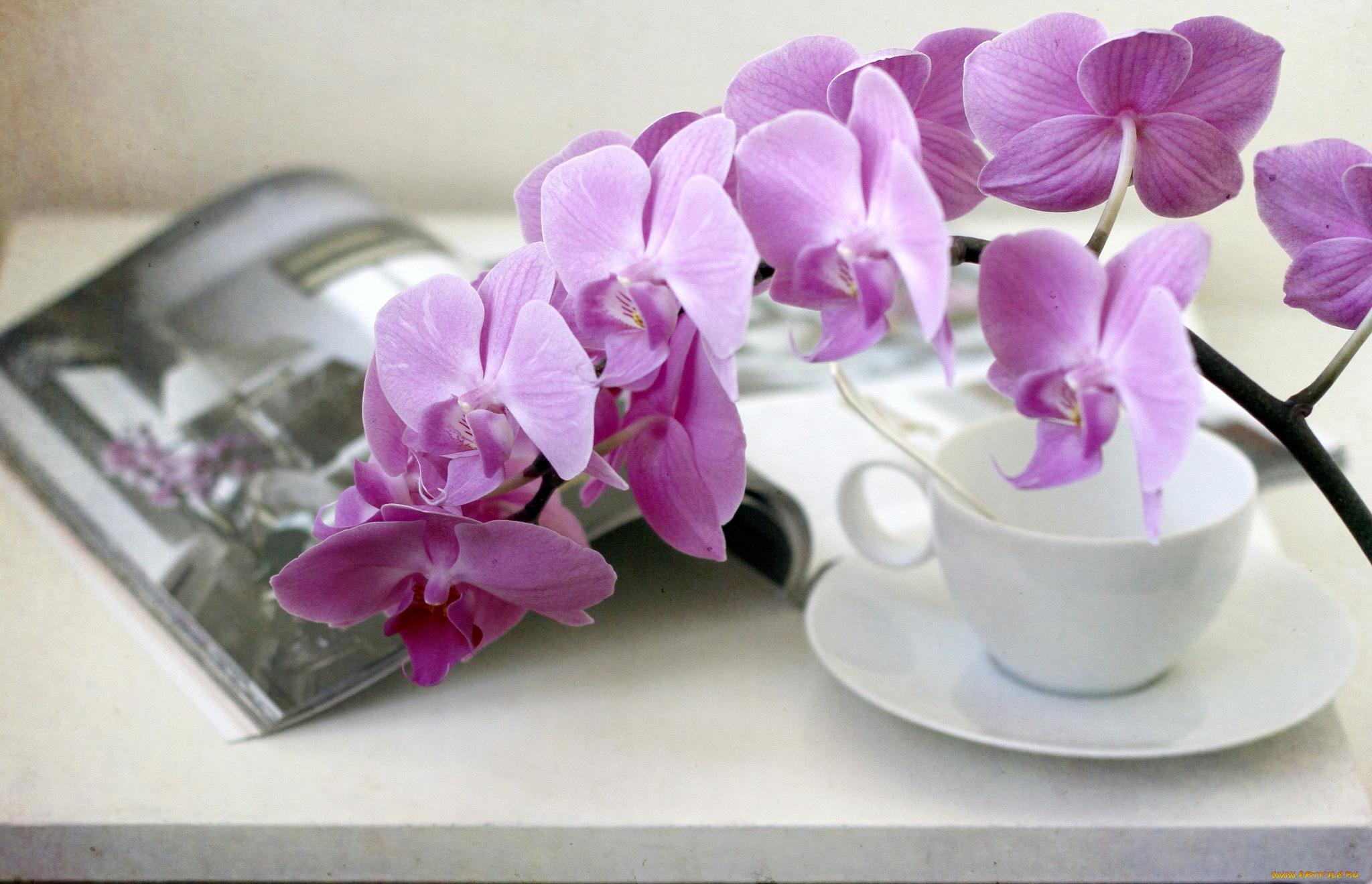 Картинки с орхидеями доброе утро