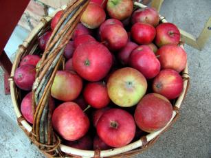 обоя еда, Яблоки, корзинка, урожай, яблоки