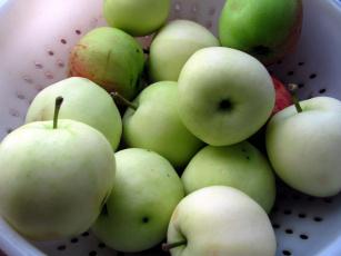 обоя еда, Яблоки, яблоки, наливные