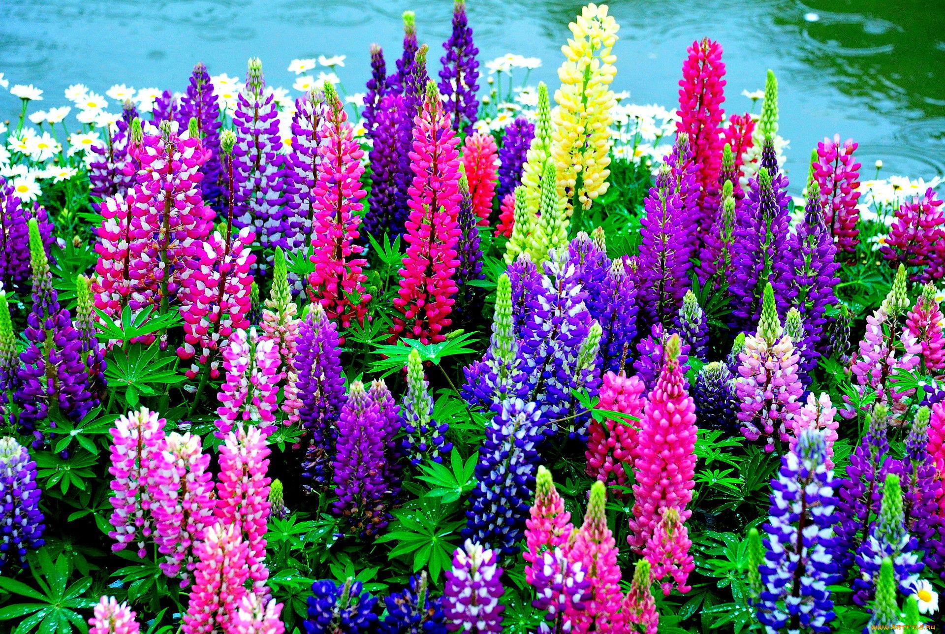 Красивые цветы для дачи фото с названиями