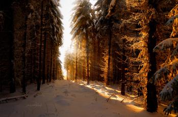 Картинка природа зима снег свет лучи солнце лес февраль германия