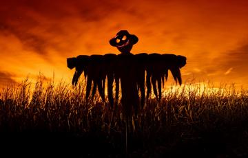 обоя праздничные, хэллоуин, поле, ночь, scarecrow