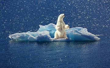 обоя животные, медведи, белый, медведь, льдина, полярный, вода