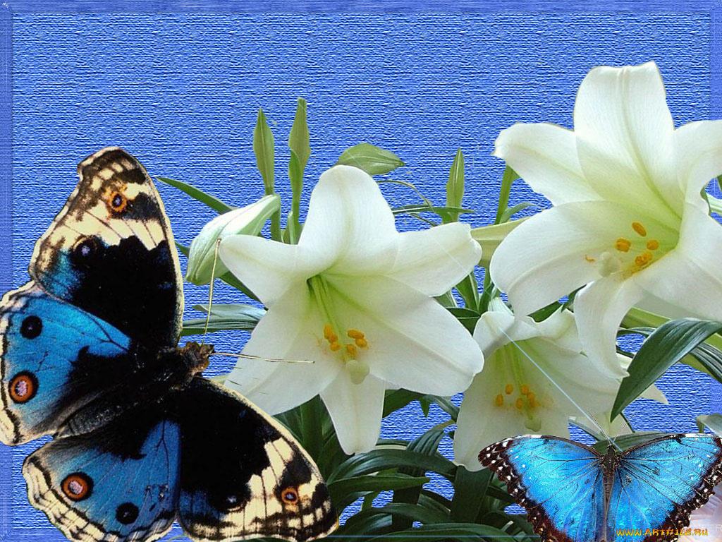 Картинки с добрым утром цветы лилии, заказ санкт петербург