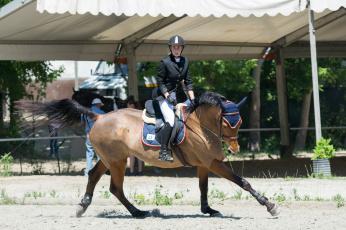 обоя спорт, конный спорт, лошадь, наездница, препятствия, конный