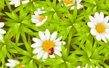 обоя векторная графика, цветы , flowers, ромашки, божья, коровка, роса, капельки