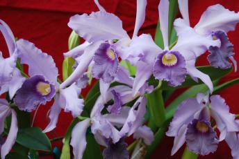 Картинка цветы орхидеи