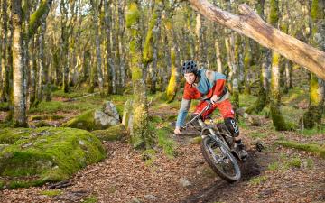 Картинка спорт велоспорт велосипедист лес