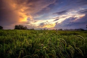 Картинка природа поля поле трава тучи
