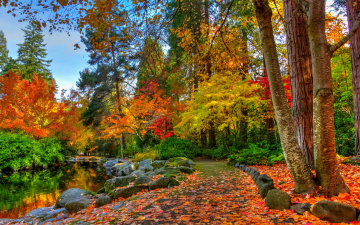 Картинка природа дороги trees autumn forest nature осен landscape river деревья лес view scenery пейзаж