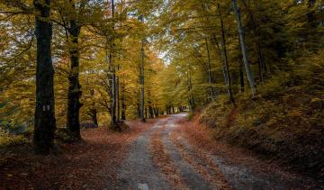 Картинка природа дороги лес дорога осень