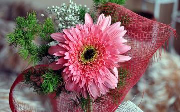 Картинка цветы герберы розовый