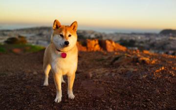 Картинка животные собаки собака закат фон