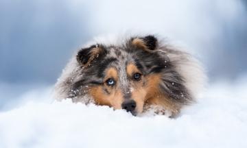 Картинка животные собаки друг взгляд собака снег зима