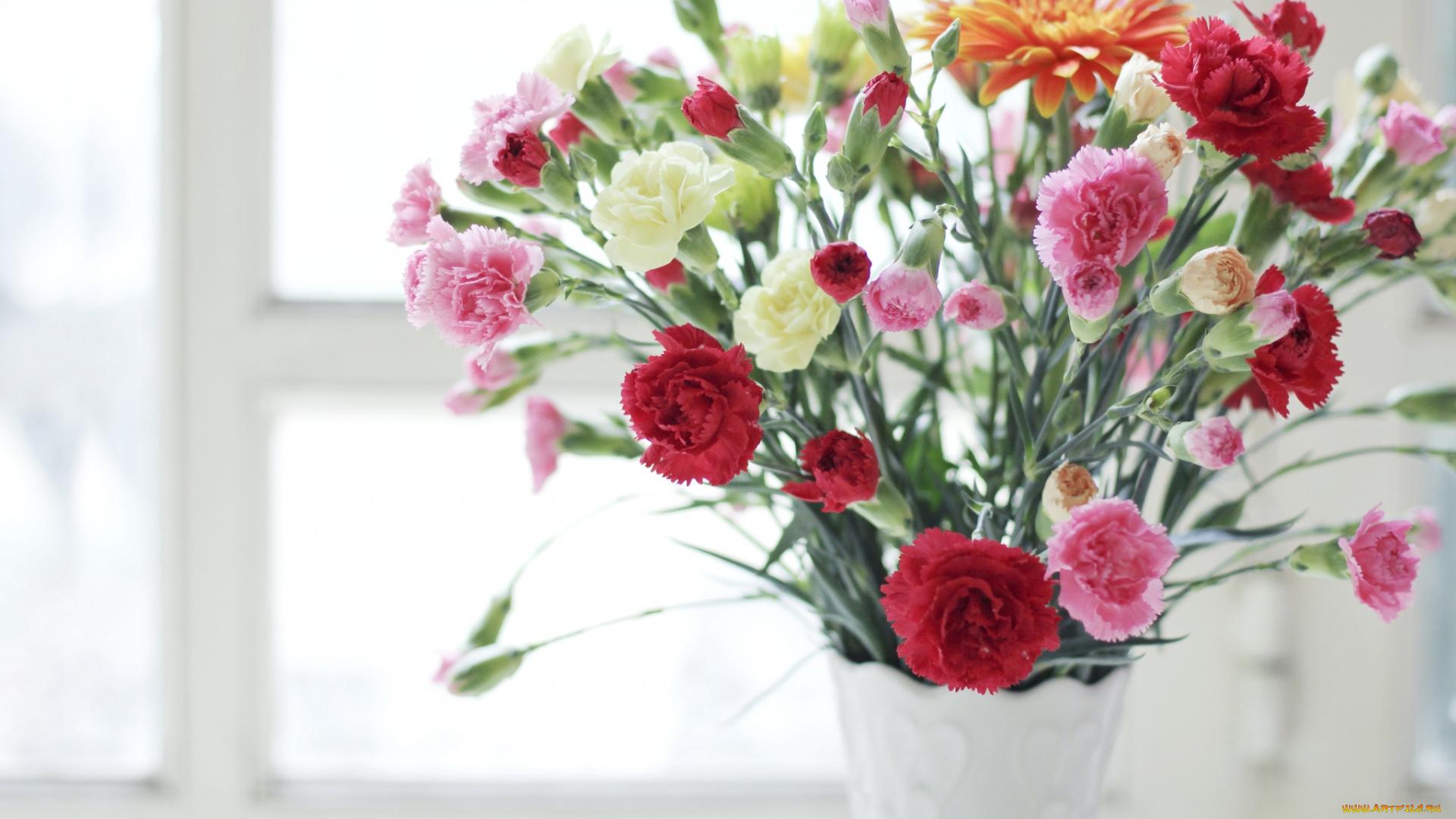 Музыкальная, картинки с красивым букетом цветов гвоздики
