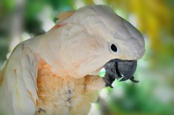 Картинка животные попугаи попугай белый