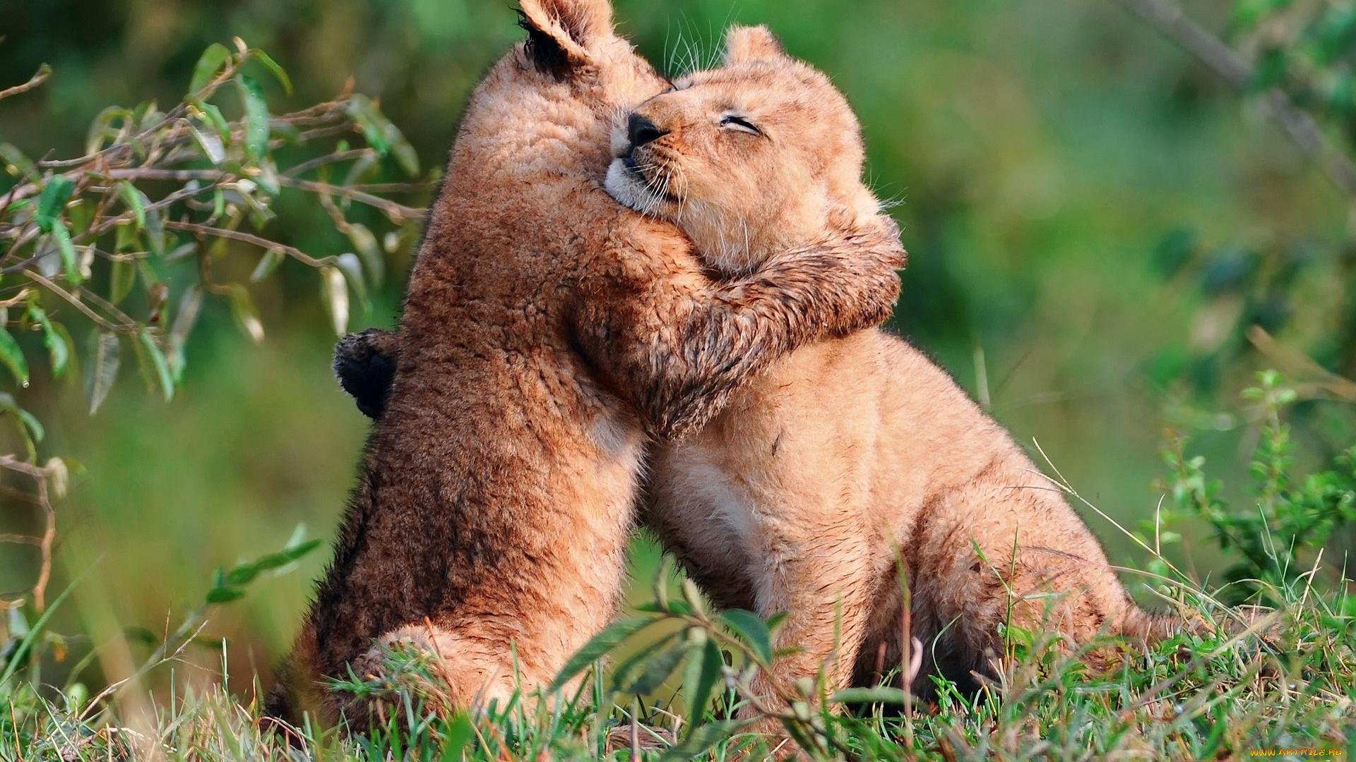 Смешные животные про любовь