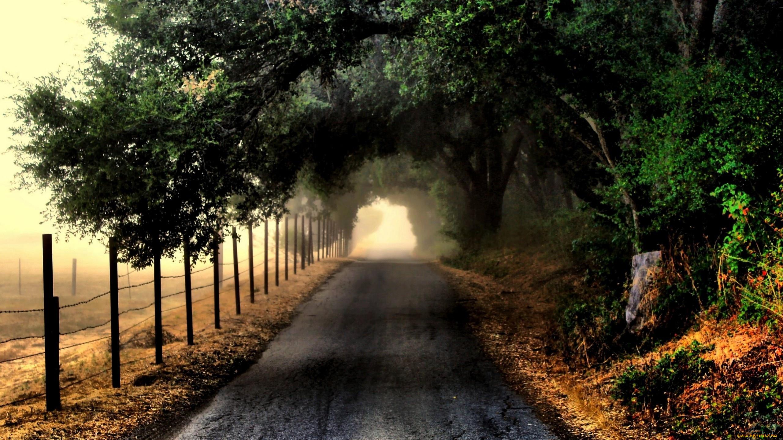 Пейзаж дорога деревья без смс