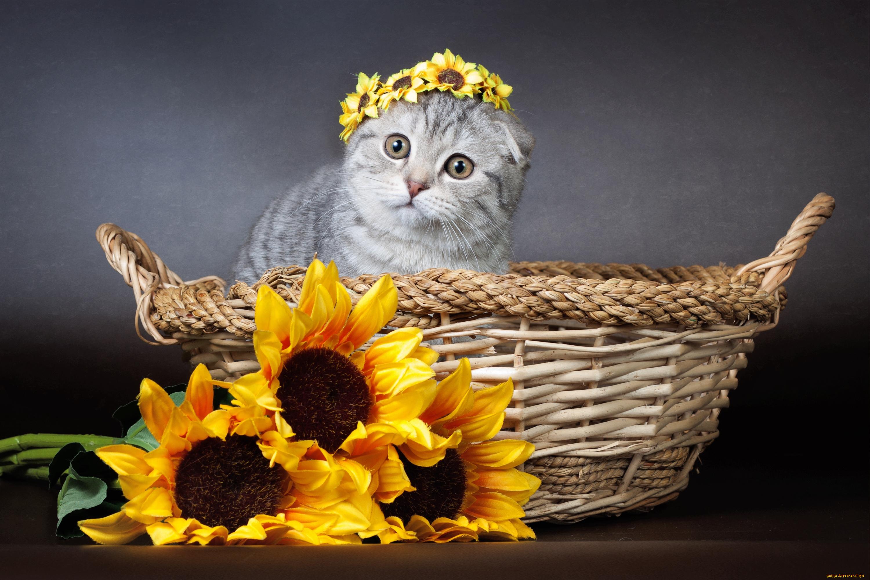 девушка котенок венок бесплатно