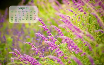 обоя календари, цветы, апрель