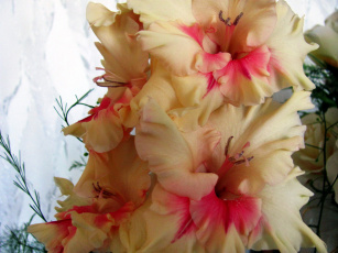 Картинка цветы гладиолусы лепестки