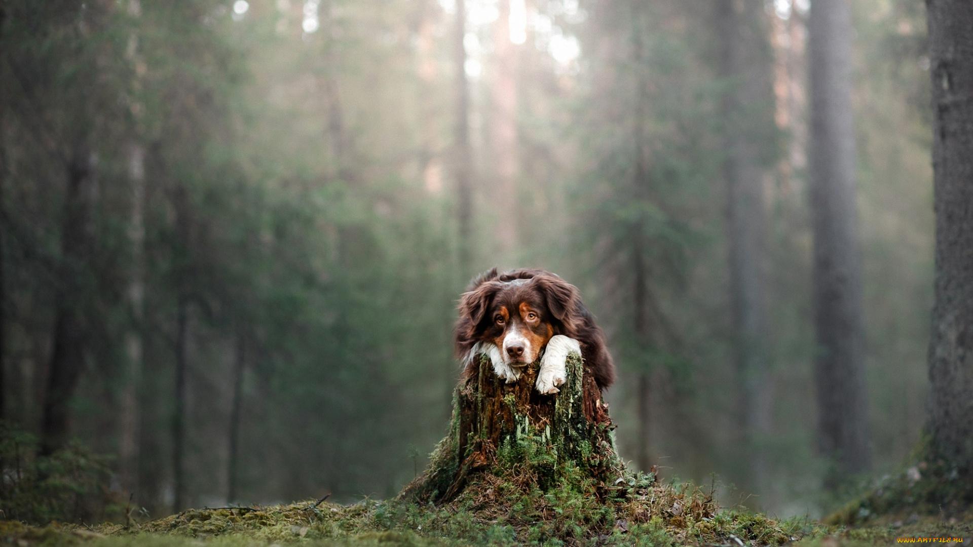 Фото щенков в лесном