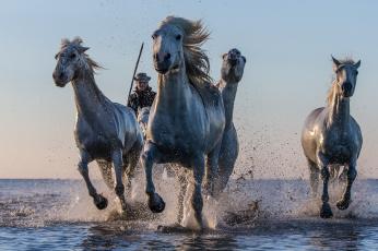 обоя животные, лошади, брызги, вода, кони