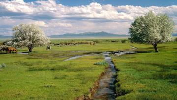обоя животные, лошади, цветение, деревья, горы, облака, ручей, трава, пастбище, табун