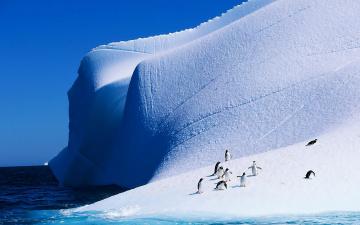 обоя животные, пингвины, ледник, птицы, океан, мерзлота, айсберг, антарктида