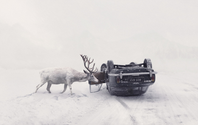 Обои картинки фото юмор и приколы, дорога, машина, зима, олень