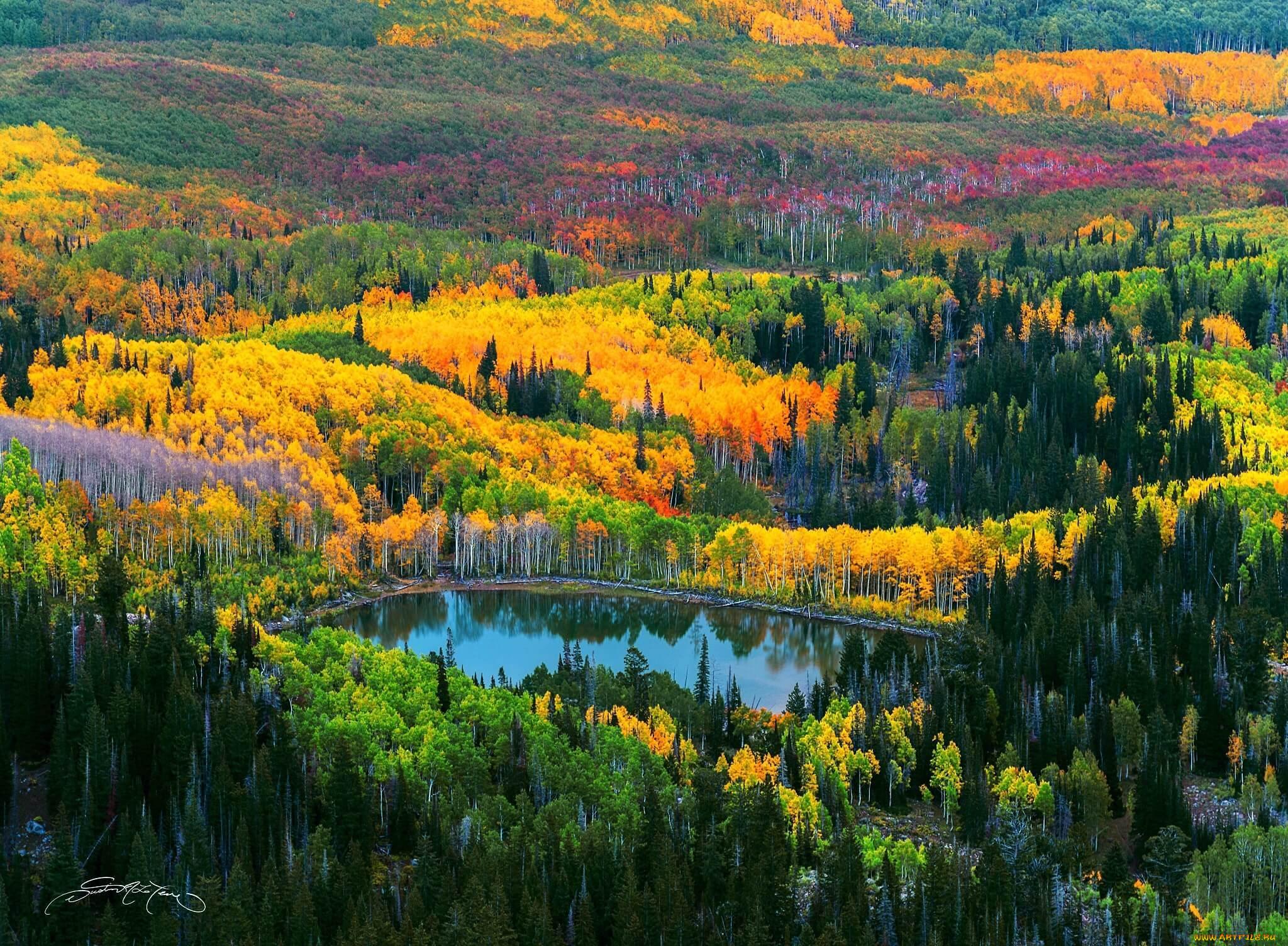 Картинки смешанных лесов дальнего востока