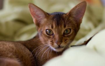 Картинка животные коты взгляд