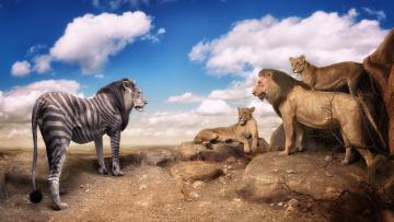 Картинка юмор+и+приколы ситуация стиль окрас зебролев львы