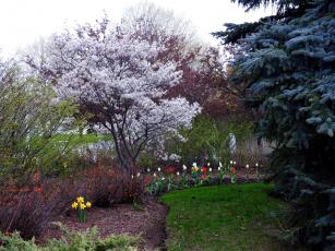 Картинка природа парк тюльпаны нарциссы деревья